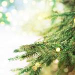 christmas_tree_pic_550_250