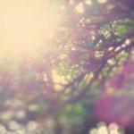 hope_tree_550_250