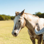 Equine Therapy Three